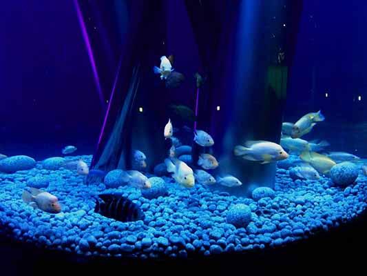 acuario con acero inoxidable
