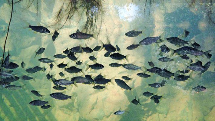 selva-viva-acuario3-txtarte