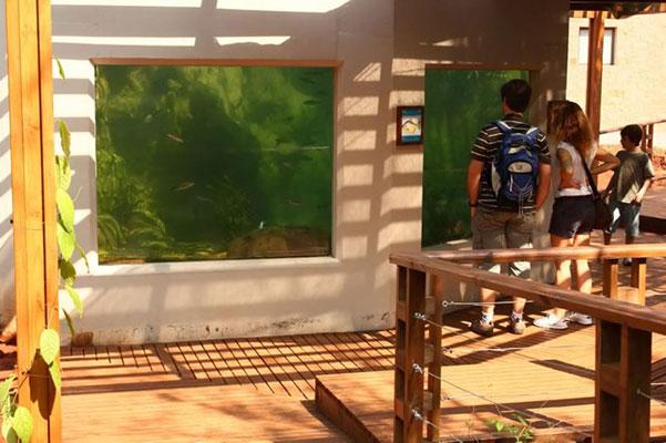 selva-viva-acuario6-txtarte